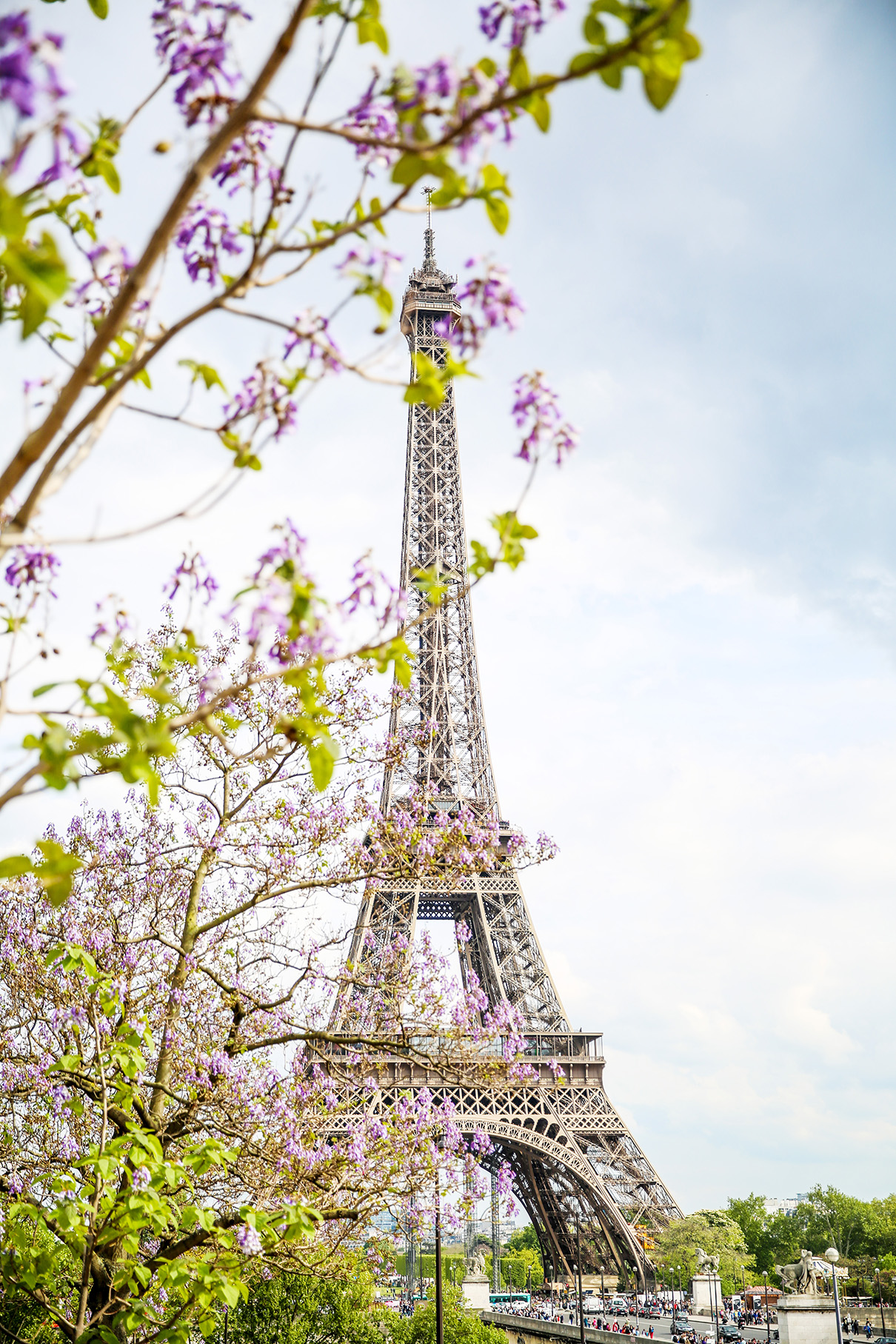 Eiffel Tower Spring Flowers-2